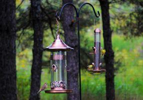 Bird Feeders by boogster11