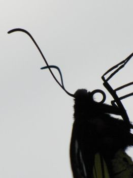 Pseudo-Silhouette Rotated by WhiteFell