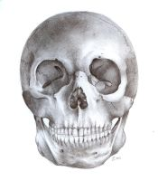 Skull - Front View by TheSimplyLovely
