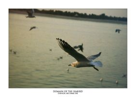 Domain of the SeaBird by lightronin