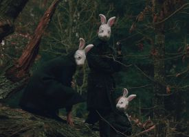 rabbits by perhydrol