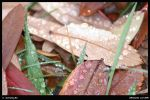 Ground Cover by latino-oz