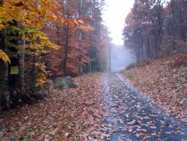 Autumn Road by AiPFilmMaker
