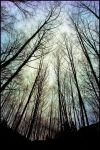 in the alder path by depleted