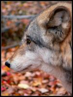 Wolf Flat Profile by nikkiburr