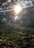 Sunlight On Forrest Floor by TheGerm84