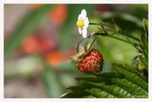 Lil strawberry by Brigitte-Fredensborg