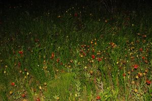 Wildflowers at Night by Stock-by-Kai