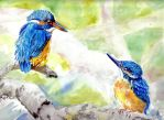 Kingfishers2 by danuta50