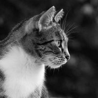 just a cat II by Wilithin