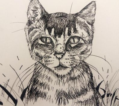 cat drawing by magicalmermaidcat