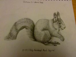 Red Squirrel Grey Pencil drawing by 29steph5