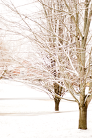 Winter Maple by rclee21