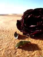 Desert Rose by 7LM