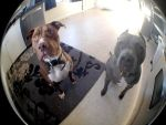 iPhone Fisheye II by LDFranklin