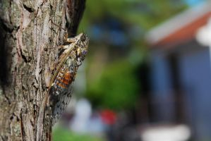 Insect in a loud chaos by Megudia