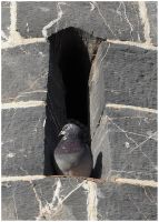 Fort Pigeon by sags
