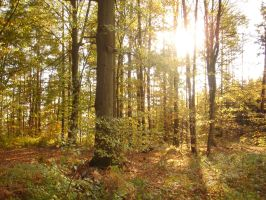 autumn forest 5 by sacral-stock