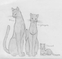 Warrior Cats - Family 3 by SaAsMiAoNa