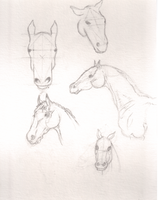 Horse sketch by AngelInTheHeart