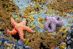 Heart of a Starfish by AngelAK47