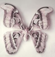 white butterfly by ftourini-stock