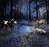 Moonlight Forest by EmmaKate66