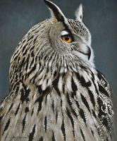 LONGEARED OWL 12 by 10 inches Oil on Panel by chandlerwildlifeart