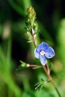 Tiny flower by marialivia16