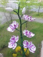 milka orchid by Karo1987
