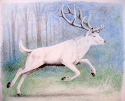 The White Stag by TernFeather