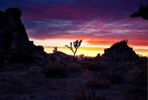 Clouds at Sunset, Joshua Tree by shubat