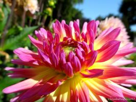 The Sunbathing Flower by Cloudwhisperer67