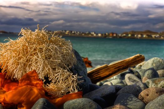Shores of Bonavista Tonight 3 by Witch-Dr-Tim