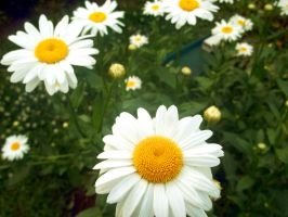 La Flora by POETRYTHROUGHLENS