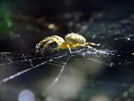 there's a spider in the web by D-u-D