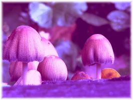 LittleWorld by narare