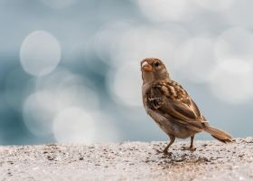 Bokeh bird by Yupa