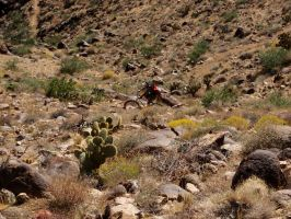 Mountain Biking in the Mohave Desert by ClymberPaddler
