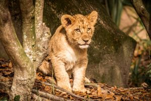 Cub 3 by 904PhotoPhactory