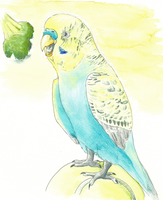 Budgie on a Ball, Wanting Broccoli by Aki-rain