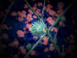 NEON NATURE ( PRETTY SPIKEY ) by ANDYBURGESS