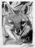 aceo grey fox cub by selvatico3