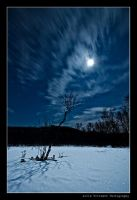 Reaching for the moon... by uberfischer