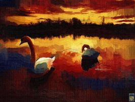 two swans at sunset by imageking10