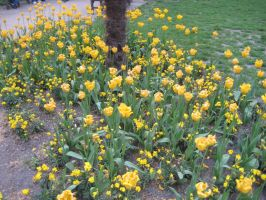 Yellow Flowers by SlidingWingz