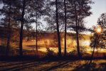 Golden Morning by Aenea-Jones