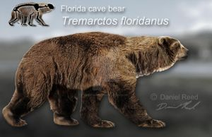 Tremarctos floridanus by Dantheman9758