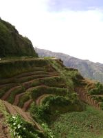 Sagada Trip 2-Rice Terreces by Madette