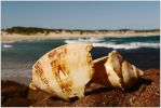 Shattered conch by wildplaces
